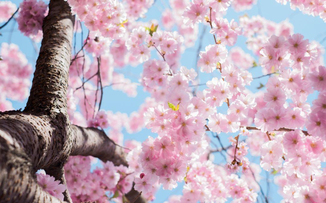 Atelier des saisons Yin Yoga & Acupuncture – Date supplémentaire – 23 février 2020