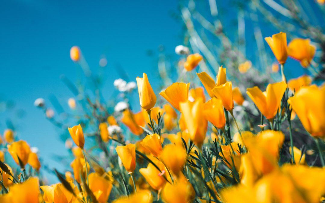Atelier des saisons – Yin Yoga & Acupuncture – Accueillir l'été – 30 mai 2021